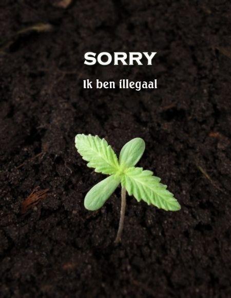 cannabisplantje